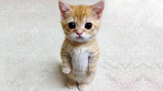 OMG So Cute Cats ♥ Best Funny Cat Videos 2021 #78
