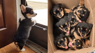 Cute Puppies Doing Funny Things 2021 #1 Cutest Dogs