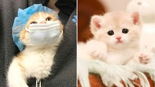 Cute Kittens Doing Funny Things 2020 🐱 #24  Cutest Cats