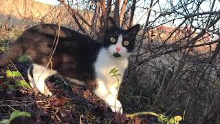 cat,  jac the cat live cats, cute cats, kitten, dog and cat