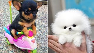 Baby Dogs 🔴 Cute and Funny Dog Videos Compilation #4   Funny Puppy Videos 2021