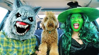 Wolf And Witch Surprises Puppy With Dancing Car Ride!