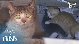 Cat's Shocked At Seeing 'This' Which Almost Killed Her Kittens (Part 1) | Animal in Crisis EP227