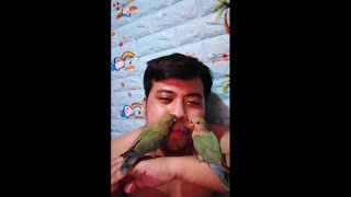 the sweetest  birds ever#cute#shorts