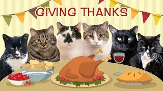 Meet Our Friends! Giving Thanks 2019! Thanksgiving Cute Cats Compilation