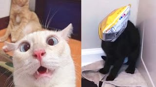 BEST CAT FAILS COMPILATION OF 2020 (FUNNY)