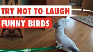 funny birds | try not to laugh | macaw | parrots | african grey parrot | talking birds compilation