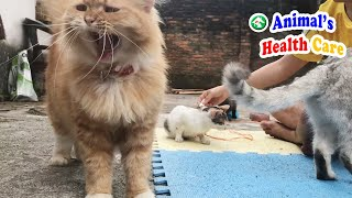 Cute Cats Meowing louldy feeling really interesting to hang out with dad