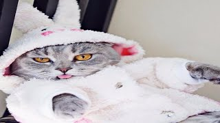 funny cats videos clean