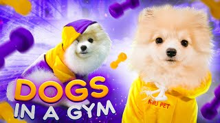 Dogs in the Gym. Cute dogs video / Cosmos and Dario