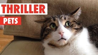 Funny Cats – Cutest And Funniest Cats Compilation