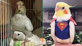 Cute Parrots Doing Funny Things #13 – 😍 Cutest Parrots In The World