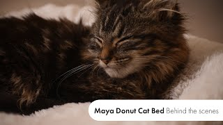 Cute Cats Compilation   Behind the Scenes of the Maya Donut Cat Bed Video