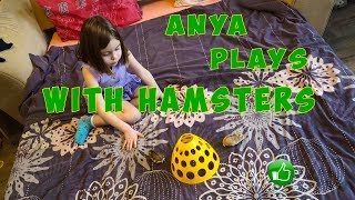 Little girl Anya plays with two funny hamsters.