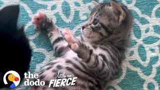 Kitten Abandoned In Box Grows Up To Be A Wild Child | The Dodo Little But Fierce