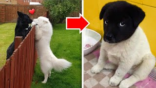 So cute Baby Animals Tiktok | Funny Dogs And Cats Compilation #30