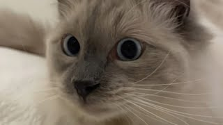 Must Watch Cat Videos 2021!😸-Hilarious Cats | YUFUS