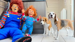 Dogs Vs Chucky Prank : Funny Dogs Louie and Marie