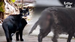 Mother Cat Couldn't Let Go Of Her Kitten That's Been Stuck In Her Bottom (Part 1) | Kritter Klub