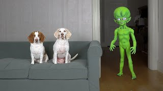 Dogs Pranked by Alien with Superpowers: Funny Dogs Maymo, Potpie & Penny vs Alien Pranks