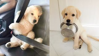 Cute Puppies Doing Funny Things 2021 #6 Cutest Dogs