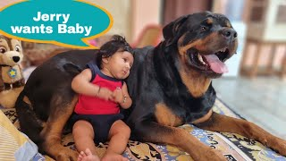 Jerry needs Baby to play with her||Funny dog videos ||Rottweiler.