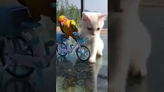 Beautiful Cats And Kittens | Short Video | Shorts