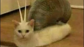 OMG SO CUTE CATS KEEP SMİLİNG 😍😻🐈-Try Not To Laugh Or Grin Challenge 😂🤣
