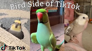 Bird Side Of TikTok