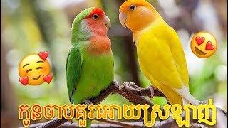 Lovely Lovebirds – TikTok