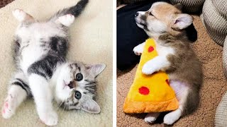 Cutest Dog and Cat – Cute Puppies Doing Funny Things 2021 #5