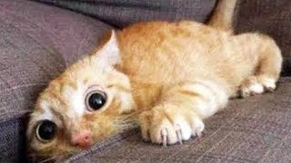 OMG So Cute Cats ♥ Best Funny Cat Videos 2020 #9