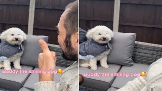 Cute Dogs Many Funny Expressions Owner Pets Crazy