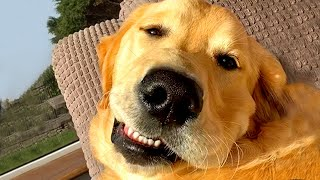 Cute Silly Dogs Bloopers & Reactions  | Funny Pet Videos