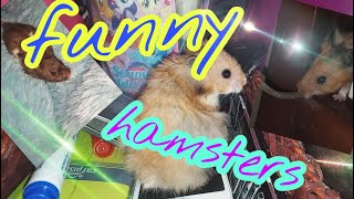 Cute Hamster !!!!! Funny Hamsters Videos compilation #6
