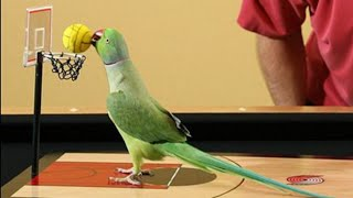 Funny Birds🐧Cute and Smart Parots Funny Compilation/Try Not To Laugh Challenge