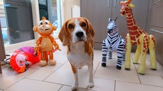 Dogs vs Inflatables Prank : Funny Dogs Louie & Marie