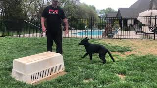 Teaching your puppy to be still