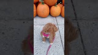 Cute and Funny Dogs Videos ^_^ funny puppy 2021 #6