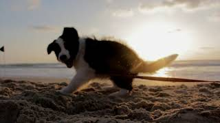 Baby Dogs – Cute and Funny Baby Dog Videos #5 | Baby Dog | Baby Dogs | Dog Baby | Dog | Dogs | Baby