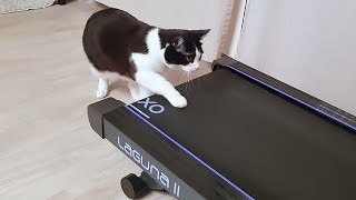 Funny Cats Playing on Treadmills