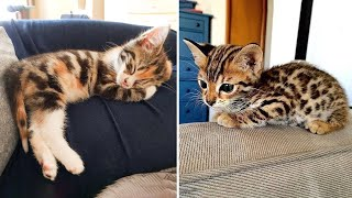 Cute Kittens Doing Funny Things 2021 🐱 #12 Cutest Cats