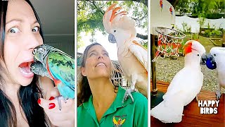 Cute #Birds Compilation 15 and Funny #Parrots  2021