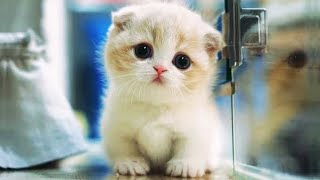 OMG So Cute Cats ♥ Best Funny Cat Videos 2021 #79