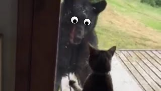 Cats You DON'T Want To Mess With: Funny Cat Videos   The Pet Collective