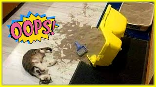When Cats Have Mood For Disasters(Funny Cat Video)
