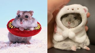 Funny Hamsters Videos Compilation #7 | Cute and Funny moments of the animals – Cute TV