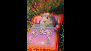 Funny Hamster Compilation – Cute and Funny Hamsters