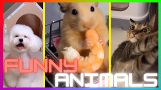 Super Funny Animals 😻 Smart Cats And Cute Dogs 🐶 | Funny And Crazy Animals Compilation