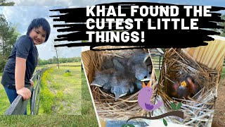 Khal finds the cutest baby birds!